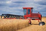 CAL AUT SCE  SK     1304427DMF SWATHER AND MAKWA WHEATROSTHERN                          09/05© CLARENCE W. NORRIS      ALL RIGHTS RESERVEDAUTUMN;CAL_SK;CALENDARS;CROPS;EQUIPMENT;FARMING;FIELDS;PLAINS;PRAIRIES;ROSTHERN;RURAL;SASKATCHEWAN;SK_;SWATHING;WHEAT  LONE PINE PHOTO              (306) 683-0889