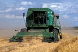 CAL AUT SCE  SK     1306123EDJD COMBINE HARVESTING MAKWA WHEATSASKATOON                       09/21© CLARENCE W. NORRIS      ALL RIGHTS RESERVEDAUTUMN;CAL_SK;CALENDARS;COMBINING;CROPS;EQUIPMENT;FARMING;FIELDS;HARVEST;JOHN_DEERE;MAKWA;OCCUPATIONS;PEOPLE;PLAINS;PRAIRIES;SASKATCHEWAN;SASKATOON;SCENES;SK_;WHEAT LONE PINE PHOTO              (306) 683-0889