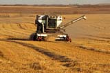 CAL AUT SCE  SK     1307010D  NMRALLIS CHALMERS GLEANERCOMBINE IN FIELD                  BLAINE LAKE                        10/03© CLARENCE W. NORRIS      ALL RIGHTS RESERVEDAUTUMN;BLAINE_LAKE;CAL_SK;CALENDARS;COMBINING;CROPS;FARMING;FIELDS;HARVEST;MALE;OCCUPATIONS;PEOPLE;PLAINS;PRAIRIES;RURAL;SASKATCHEWAN;SCENES;SK_LONE PINE PHOTO              (306) 683-0889