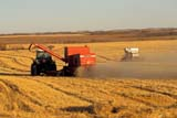 CAL AUT SCE  SK     1307028BDTWO COMBINES HARVESTING IN FIELDBLAINE LAKE                        10/03© CLARENCE W. NORRIS      ALL RIGHTS RESERVEDAUTUMN;BLAINE_LAKE;CAL_SK;CALENDARS;COMBINING;FARMING;FIELDS;HARVEST;PLAINS;PRAIRIES;RURAL;SASKATCHEWAN;SCENES;SK_LONE PINE PHOTO              (306) 683-0889