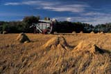 CAL AUT SCE  SK     1412931BDSTOOKS IN FIELD WITH THRESHING MACHINE IN DISTANCEBORDEN                              09/23© CLARENCE W. NORRIS      ALL RIGHTS RESERVEDAUTUMN;BORDEN;CAL_SK;CALENDARS;CROPS;EQUIPMENT;FARMING;FIELDS;HARVEST;OATS;PLAINS;PRAIRIES;RURAL;SASKATCHEWAN;SCENES;SK_;STOOKS;THRESHINGLONE PINE PHOTO              (306) 683-0889