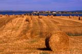 CAL AUT SCE  PE  CRS0000167D   HAY BALESFRENCH RIVER                      09/..© CLIFF SANDESON             ALL RIGHTS RESERVEDATLANTIC;AUTUMN;BALES;CAL_PE;CALENDARS;CROPS;EAST_COAST;EDWARD;FARMING;FRENCH_RIVER;HAY;ISLAND;MARITIMES;PE_;PEI;PRINCE;PRINCE_EDWARD_ISLAND;RIVERS;SCENES;WATER LONE PINE PHOTO              (306) 683-0889