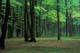 AUTUMN FOREST SCENE, GATINEAU PROVINCIAL PARK