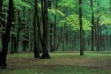 CAL AUT SCE  QC  JLB0002170DAUTUMN FOREST SCENEGATINEAU PROVINCIAL PARK                           09/. .©JOHN L BYKERK                   ALL RIGHTS RESERVEDAUTUMN;CAL_QC;CALENDARS;FOREST;GATINEAU_PP;GREEN;PP_;QC_;QUEBEC;SCENES;TREESLONE PINE PHOTO                  (306) 683-0889