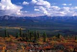 CAL AUT SCE  YT  KJM0219503DFALL COLOURED HILLSIDE AND MOUNTAINS EAGLES PLAINS                    08..© KEVIN MORRIS                  ALL RIGHTS RESERVEDALPINE;AUTUMN;CAL_YT;CALENDARS;CORDILLERA;EAGLE_PLAINS;MOUNTAINS;SCENES;VALLEYS;YT_;YUKONLONE PINE PHOTO               (306) 683-0889