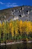 CAL AUT SCE  YT  KJM0219907D  VTFALL COLOURED TREES AND HILL ON OGILVIE RIVERDEMPSTER HIGHWAY            09..© KEVIN MORRIS                  ALL RIGHTS RESERVEDALPINE;AUTUMN;BULLETINS;CAL_YT;CALENDARS;CORDILLERA;DEMPSTER_HIGHWAY;FOREST;MOUNTAINS;OGILVIE_RIVER;SCENES;TREES;VTL;YT_;YUKONLONE PINE PHOTO               (306) 683-0889