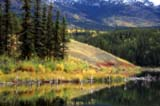 CAL AUT SCE  YT  PEH04HF056DX AUTUMN SHORELINE, DOUBLE EXPOSURE AND SOFT FOCUS HIDDEN LAKE                       ....© PHIL HOFFMAN                ALL RIGHTS RESERVEDALPINE;AUTUMN;CAL_YT;CALENDARS;CORDILLERA;HIDDEN_LAKE;LAKES;PHOTOGRAPHY;SCENES;SHORELINE;SOFT_FOCUS;WATER;YT_;YUKONLONE PINE PHOTO              (306) 683-0889