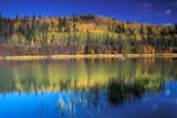 CAL AUT SCE  YT  PEH1000005DFIVE MILE LAKE IN AUTUMNMAYO                                09..© PHIL HOFFMAN                ALL RIGHTS RESERVEDAUTUMN;BOREAL;CAL_YT;CALENDARS;CORDILLERA;COTTAGE;FIVE_MILE_LAKE;LAKES;MAYO;REFLECTIONS;SCENES;WATER;YT_;YUKONLONE PINE PHOTO              (306) 683-0889