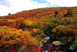 CAL AUT SCE  YT  PEH1000030DALPINE FALL COLOURS AND STREAMCOAL LAKE ROAD                 09..© PHIL HOFFMAN                  ALL RIGHTS RESERVEDALPINE;AUTUMN;CAL_YT;CALENDARS;COAL_LAKE_ROAD;COLOUR;CORDILLERA;SCENES;STREAMS;YT_;YUKONLONE PINE PHOTO                (306) 683-0889