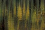 CAL AUT SCE  YT  PEH1000035DFALL REFLECTIONS IN LAKEFIVE MILE LAKEMAYO                                09..© PHIL HOFFMAN                ALL RIGHTS RESERVEDAUTUMN;CAL_YT;CALENDARS;CORDILLERA;COTTAGE;FIVE_MILE_LAKE;LAKES;MAYO;REEDS;REFLECTIONS;SCENES;WATER;YT_;YUKONLONE PINE PHOTO              (306) 683-0889