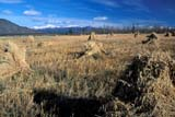 CAL AUT  SCE YT  PEH1000039DSTOOKS OF OATS IN FALL FIELDWHITEHORSE                         10...        © PHIL HOFFMAN                   ALL RIGHTS RESERVEDALPINE;AUTUMN;CAL_YT;CALENDARS;CORDILLERA;CROPS;FARMING;FIELDS;NORTH;MOUNTAINS;OATS;SCENES;STOOKS;WHITEHORSE;YT_;YUKONLONE PINE PHOTO                  (306) 683-0889