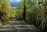 CAL AUT SCE  YT  PEH1000126DAUTUMN ON DUNCAN CREEK ROADMAYO                                 09..© PHIL HOFFMAN                 ALL RIGHTS RESERVEDALPINE;AUTUMN;CAL_YT;CALENDARS;CORDILLERA;DUNCAN_CREEK_ROAD;MAYO;NORTH;ROADS;SCENES;SHIELD;YT_;YUKONLONE PINE PHOTO               (306) 683-0889
