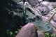 CENTROSAURUS DINOSAUR SCULPTURE, CALGARY ZOO, CALGARY