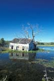 ELE FLO MIS  MB  PNB1000436D   VTOLD HOUSE IN FLOODED AREANEEPAWA                           ....© PAUL BROWNE               ALL RIGHTS RESERVEDABANDONED;BULLETINS;ELEMENTS;FLOODING;MANITOBA;MB_;NEEPAWA;OLD;PLAINS;PRAIRIES;RIVERS;VTL;WATERLONE PINE PHOTO              (306) 683-0889