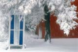 ELE SNO MIS  AB  KJM0302211D    PHONE BOOTH UNDER SNOW COVERED TREETHREE HILLS                       04/..© KEVIN MORRIS                ALL RIGHTS RESERVEDAB_;ALBERTA;BLIZZARDS;ELEMENTS;PHONE_BOOTHS;PHOTOGRAPHY;PLAINS;PRAIRIES;SNOW;SNOWSTORM;SOFT_FOCUS;SPRING;THREE_HILLS;TREES LONE PINE PHOTO              (306) 683-0889