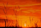 ELE SUN SET  SK     1617723D       GRASS AGAINST SUNSET SKYCRANBERRY FLATSSASKATOON                           1017© CLARENCE W. NORRIS          ALL RIGHTS RESERVEDCLOUDS;CRANBERRY_FLATS;GRASS;ELEMENTS;PLAINS;PRAIRIES;RURAL;SASKATCHEWAN;SK_;SKY;SUNSETS  LONE PINE PHOTO                  (306) 683-0889