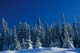 SNOW-COVERED PINES, KOOTENAY NATIONAL PARK