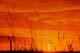 GRASS AGAINST SUNSET SKY, CRANBERRY FLATS