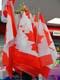 CANADIAN FLAGS ON DISPLAY, SASKATOON