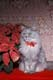 PERSIAN CAT, POINSETTIA BOW, SITTING NEAR POINSETTIA, PORT PERRY