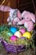 TWO LITTLE BUNNIES AND BASKET OF EASTER EGGS, SASKATOON