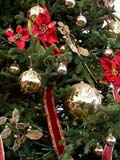 EVE CHR MIS  SK  CWN02D5120D  VTRIBBONS, BALLS AND BOWS ON CHRISTMAS TREEWILSON'S GREENHOUSE AND GARDEN CENTRESASKATOON                            128© CLARENCE W NORRIS           ALL RIGHTS RESERVEDBULLETINS;CHRISTMAS;DECORATIONS;EVENTS;HOLIDAYS;PLAINS;PRAIRIES;SASKATCHEWAN;SASKATOON;SK_;TREES;VTLLONE PINE PHOTO                  (306) 683-0889.