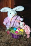 EVE EAS MIS  SK  CWN2202123D  MR # 354  VTEASTER BUNNY, TWO LITTLE BUNNIES AND BASKET OF EASTER EGGSSASKATOON                          0330         © CLARENCE W. NORRIS         ALL RIGHTS RESERVEDBASKETS;BUNNIES;EASTER;EGGS;EVENTS;PLAINS;PRAIRIES;RABBITS;SASKATCHEWAN;SASKATOON;SK_;SPRING;TOYS;VTLLONE PINE PHOTO                  (306) 683-0889