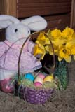 EVE EAS MIS  SK  CWN2202127D  VTEASTER BUNNY, DAFFODILS, BASKET OF EASTER EGGSSASKATOON                       03/31© CLARENCE W. NORRIS      ALL RIGHTS RESERVEDBASKETS;BUNNIES;DAFFODILS;EASTER;EGGS;EVENTS;FLOWERS;PLAINS;PRAIRIES;RABBITS;SASKATCHEWAN;SASKATOON;SK_;SPRING;TOYS;VTLLONE PINE PHOTO              (306) 683-0889
