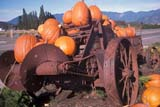 EVE HAL MIS  BC  WFS1000111DPUMPKINS ON OLD FARM EQUIPMENTSARDIS                               10/..© WILLIAM F. SMITH            ALL RIGHTS RESERVEDAUTUMN;BC_;BRITISH;BRITISH_COLUMBIA;COLUMBIA;CORDILLERA;CROPS;DECORATIONS;EQUIPMENT;EVENTS;FARMING;HALLOWEEN;PACIFIC;PUMPKINS;SARDIS;RURAL;WEST_COASTLONE PINE PHOTO              (306) 683-0889