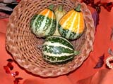 EVE THA MIS  SK  CWN02D4076D  GOURD DISPLAY, THANKSGIVINGSASKATOON                       1013© CLARENCE W. NORRIS      ALL RIGHTS RESERVEDBASKETS;CRAFTS;EVENTS;FOOD;GOURDS;RELIGION;PLAINS;PRAIRIES;SASKATCHEWAN;SASKATOON;SK_;THANKSGIVING LONE PINE PHOTO              (306) 683-0889
