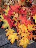 EVE THA MIS  SK  CWN02D4115D  VT   MAPLE LEAF DISPLAY, THANKSGIVINGSASKATOON                       1013© CLARENCE W. NORRIS      ALL RIGHTS RESERVEDAUTUMN;BULLETINS;CRAFTS;EVENTS;LEAVES;PLAINS;PRAIRIES;SASKATCHEWAN;SASKATOON;SK_;THANKSGIVING;VTLLONE PINE PHOTO              (306) 683-0889