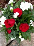 EVE WED MIS  BC  CWN2D2558D  VT BRIDAL BOUQUETSALMON ARM                          08/. .© CLARENCE W. NORRIS           ALL RIGHTS RESERVEDBC_;BOUQUETS;BRITISH;BRITISH_COLUMBIA;BULLETINS;COLUMBIA;CORDILLERA;EVENTS;FLOWERS;SALMON_ARM;VTL;WEDDINGSLONE PINE PHOTO                  (306) 683-0889