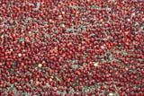 FAR CRO CRA  ON  BMM1001246DRED SEA OF CRANBERRIESBALA                                   10/..© BEV MCMULLEN                ALL RIGHTS RESERVEDAUTUMN;BALA;CENTRAL;CRANBERRIES;CROPS;FARMING;FOOD;HARVEST;ON_;ONTARIO;PATTERNSLONE PINE PHOTO              (306) 683-0889