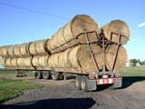 FAR CRO HAY  AB  CWN02D3223D   ROUND BALES ON TRANSPORT TRUCKSTROME                                 08/. .© CLARENCE W. NORRIS          ALL RIGHTS RESERVEDAB_;ALBERTA;BALES;CROPS;FARMING;FORAGE;HAY;INDUSTRY;PLAINS;PRAIRIES;ROUND;STROME;TRAILERS;TRANSPORTATION;TRUCKINGLONE PINE PHOTO                  (306) 683-0889