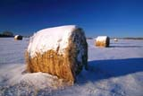 FAR CRO  HAY  SK     1618752DROUND BALES IN WINTERSASKATOON                            124© CLARENCE W. NORRIS           ALL RIGHTS RESERVEDBALES;CROPS;FARMING;FIELDS;FORAGE;HAY;PLAINS;PRAIRIES;ROUND;RURAL;SASKATCHEWAN;SASKATOON;SCENES;SK_;SNOW;WINTERLONE PINE PHOTO                  (306) 683-0889