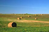 FAR  CRO  HAY  SK    1809208DROUND HAY BALES IN SUMMER FIELDESTEVAN                             0721© CLARENCE W. NORRIS      ALL RIGHTS RESERVEDBALES;CROPS;ESTEVAN;FARMING;FIELDS;FORAGE;HAY;PLAINS;PRAIRIES;ROUND;RURAL;SASKATCHEWAN;SCENES;SK_;SUMMERLONE PINE PHOTO                  (306) 683-0889
