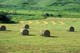ROUND BALES IN HAY FIELD, CONGLOMERATE VALLEY, EASTEND