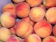 PEACHES, SALMON ARM