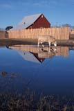 FAR LIV CAT  SK     1901823D  VTRED BARN & COW REFLECTED IN SPRING MELT WATERSASKATOON                            0411© CLARENCE W. NORRIS           ALL RIGHTS RESERVEDBULLETINS;CATTLE;FARMING;FENCES;FLOODING;LIVESTOCK;PLAINS;PRAIRIES;REFLECTIONS;RURAL;SASKATCHEWAN;SASKATOON;SCENES;SK_;VTL;WATERLONE PINE PHOTO                  (306) 683-0889