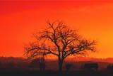 FAR LIV CAT  SK   WS20010DCATTLE UNDER TREE IN PASTURE AT SUNRISEBEAVER CREEK                      10..© WAYNE SHIELS                  ALL RIGHTS RESERVEDANIMALS;BEAVER_CREEK;CATTLE;COWS;FARMING;PLAINS;PRAIRIES;RURAL;SASKATCHEWAN;SCENES;SILHOUETTE;SCENES;SK_;SKYLONE PINE PHOTO                (306) 683-0889