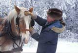 FAR LIV HOR  SK     1800405D  MRBELGIUM HORSES, MAN AND FROSTY TREESST. DENIS                            0218© CLARENCE W. NORRIS      ALL RIGHTS RESERVEDANIMALS;BELGIUM;FARMING;HORSES;LIVESTOCK;MALE;MR_;PEOPLE;PLAINS;PRAIRIES;RURAL;SASKATCHEWAN;SCENES;SK_;ST_DENIS;WINTERLONE PINE PHOTO              (306) 683-0889