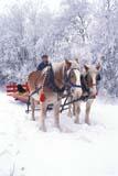 FAR LIV HOR  SK     1800207D  MR  VTBELGIUM HORSES, MAN AND FROSTY TREESST. DENIS                            0218© CLARENCE W. NORRIS      ALL RIGHTS RESERVEDANIMALS;BELGIUM;BULLETINS;FARMING;HORSES;LIVESTOCK;MALE;MR_;PEOPLE;PLAINS;PRAIRIES;RURAL;SASKATCHEWAN;SCENES;SK_;ST_DENIS;VTL;WINTERLONE PINE PHOTO              (306) 683-0889
