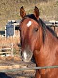 FAR LIV HOR  SK  CWN02D3671D  VTCLOSE UP OF HORSE IN CORRALQU'APPELLE VALLEYMELVILLE                            0928© CLARENCE W. NORRIS      ALL RIGHTS RESERVEDANIMALS;BULLETINS;FARMING;HORSES;LIVESTOCK;MELVILLE;PLAINS;PRAIRIES;QU_APPELLE_VALLEY;RURAL;SASKATCHEWAN;SCENES;SK_;VTLLONE PINE PHOTO              (306) 683-0889