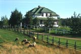 FAR LIV SHE   AB     1613855D     SHEEP GRAZING IN SUMMER PASTURE, HOUSE BEHINDUKRAINIAN CULTURAL VILLAGEEDMONTON                             08/19             © CLARENCE W. NORRIS           ALL RIGHTS RESERVEDAB_;ALBERTA;EDMONTON;FARMING;FARMYARDS;FENCES;GRAZING;LIVESTOCK;PASTURES;PLAINS;PIONEERS;PRAIRIES;RANCHING;RURAL;SCENES;SHEEP;STRUCTURES;UKRAINIAN_CULTURAL_VILLAGE;WOOL  LONE PINE PHOTO                  (306) 683-0889