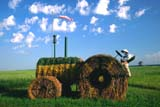 FAR SCE MIS  MB     1808508DSTRAW BALE TRACTORDELORMAINE                            0721© CLARENCE W. NORRIS           ALL RIGHTS RESERVEDBALES;DELORMAINE;FARMING;HUMOUR;MANITOBA;MB_;PLAINS;PRAIRIES;RURAL;SCENES;SUMMER;TRACTORSLONE PINE PHOTO                  (306) 683-0889
