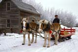 FAR SCE MIS  SK     1800123D  MRBELGIUM HORSES AND SLEIGH IN WINTERST. DENIS                              0218© CLARENCE W. NORRIS        ALL RIGHTS RESERVEDANIMALS;BELGIUM;FARMING;HORSES;LIVESTOCK;MALE;MR_;PEOPLE;PLAINS;PRAIRIES;RURAL;SASKATCHEWAN;SCENES;SK_;SLEIGHS;ST_DENIS;WINTERLONE PINE PHOTO                (306) 683-0889