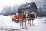 FAR SCE MIS  SK     1800128D  MRBELGIUM HORSES AND SLEIGH IN WINTER, HOUSEST. DENIS                            0218© CLARENCE W. NORRIS      ALL RIGHTS RESERVEDANIMALS;FARMING;HORSES;LIVESTOCK;MALE;MR_;PEOPLE;PIONEERS;PLAINS;PRAIRIES;RURAL;SASKATCHEWAN;SCENES;SK_;SLEIGHS;ST_DENIS;WINTERLONE PINE PHOTO              (306) 683-0889