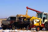 FAR SCE MIS  SK     1309703D  LOADING OATS TO HAUL TO ELEVATORHAGUE                                10/26© CLARENCE W. NORRIS      ALL RIGHTS RESERVEDCROPS;FARMING;GRAIN;HAGUE;HAULING;MALE;OATS;OCCUPATIONS;PEOPLE;PLAINS;PRAIRIES;RURAL;SASKATCHEWAN;SCENES;SK_;TRUCKING;WINTERLONE PINE PHOTO              (306) 683-0889