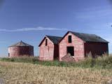 FAR SCE MIS  SK  CWN02D3731DOLD RED GRANARIES, BLUE SKYYORKTON                           0928© CLARENCE W. NORRIS      ALL RIGHTS RESERVEDDAMAGED;DOORS;FARMING;GRANARIES;OLD;PLAINS;PRAIRIES;RURALSASKATCHEWAN;;SK_;STRUCTURES;WEATHERED;YORKTONLONE PINE PHOTO              (306) 683-0889