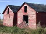 FAR SCE MIS  SK  CWN02D3734DHANGING GRANARY DOOR ON RED BINSSPRINGSIDE                         0928© CLARENCE W. NORRIS      ALL RIGHTS RESERVEDDAMAGED;DOORS;FARMING;GRANARIES;OLD;PLAINS;PRAIRIES;RURAL;SASKATCHEWAN;SK_;SPRINGSIDE;WEATHEREDLONE PINE PHOTO              (306) 683-0889